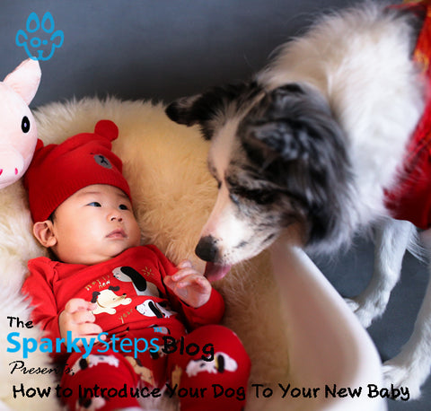 How To Introduce Your Dog To Your New Baby - Sparky Steps Chicago Pet Sitters - Article
