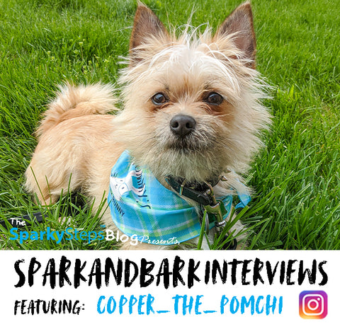Interview - Copper_The_Pomchi - Sparky Steps - SPARKandBARK INTERVIEWS