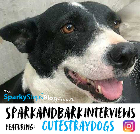 Interviews - CuteStrayDgos - Sparky Steps - SPARKandBARK INTERVIEWS