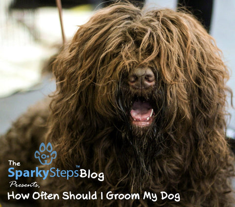 Sparky Steps - How Often Should I Groom My Dog - Shorty Styles