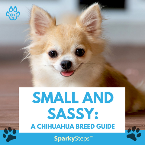 Chihuahua Featured image