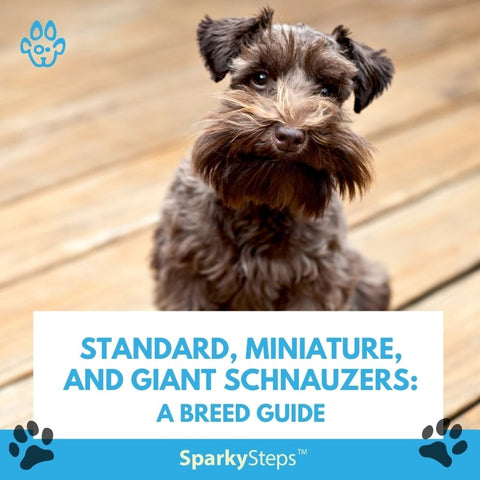 Standard, Miniature, and Giant Schnauzers A Breed Guide