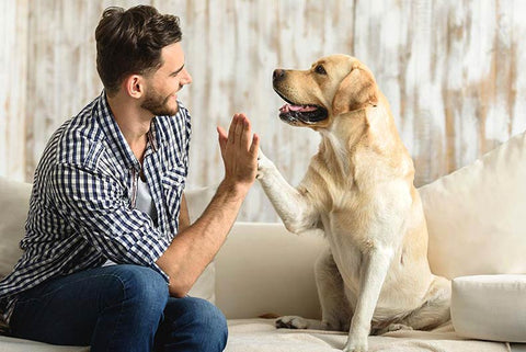 How to earn a dog's trust - positive reinforcement