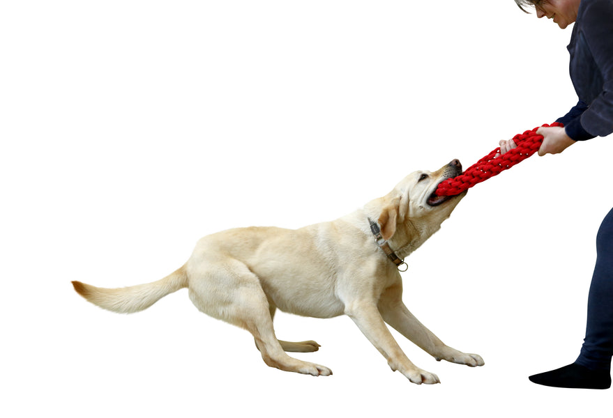 The Benefits of Playing Tug With Your Dog