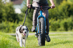 Person biking with their dog next to them