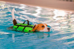 Dog swimming with a life jacket on