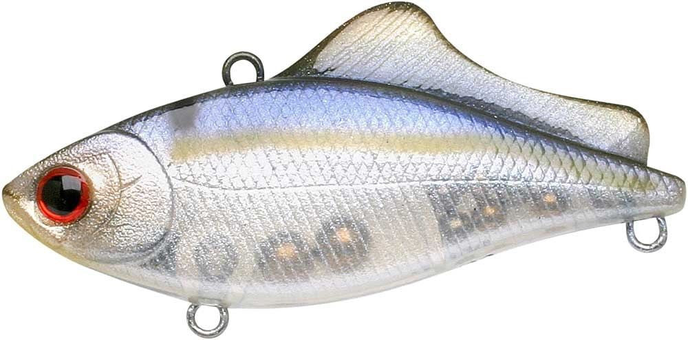 Ghost Threadfin Shad