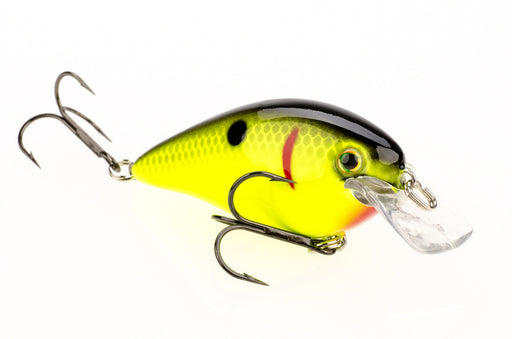 Black Back Chartreuse