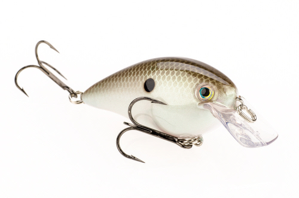 Green Gizzard Shad