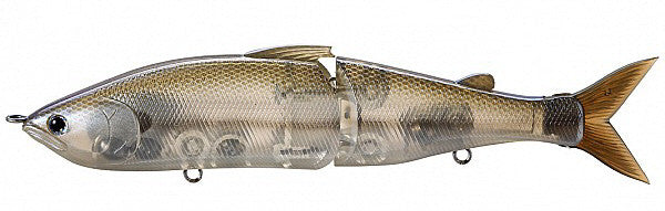 Striped Shad