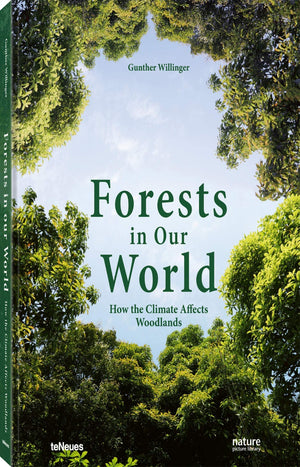 Forests in Our World: How the Climate Affects Woodlands