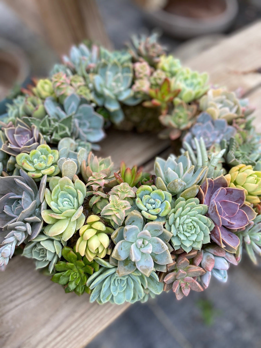 Mixed Succulent Wreath