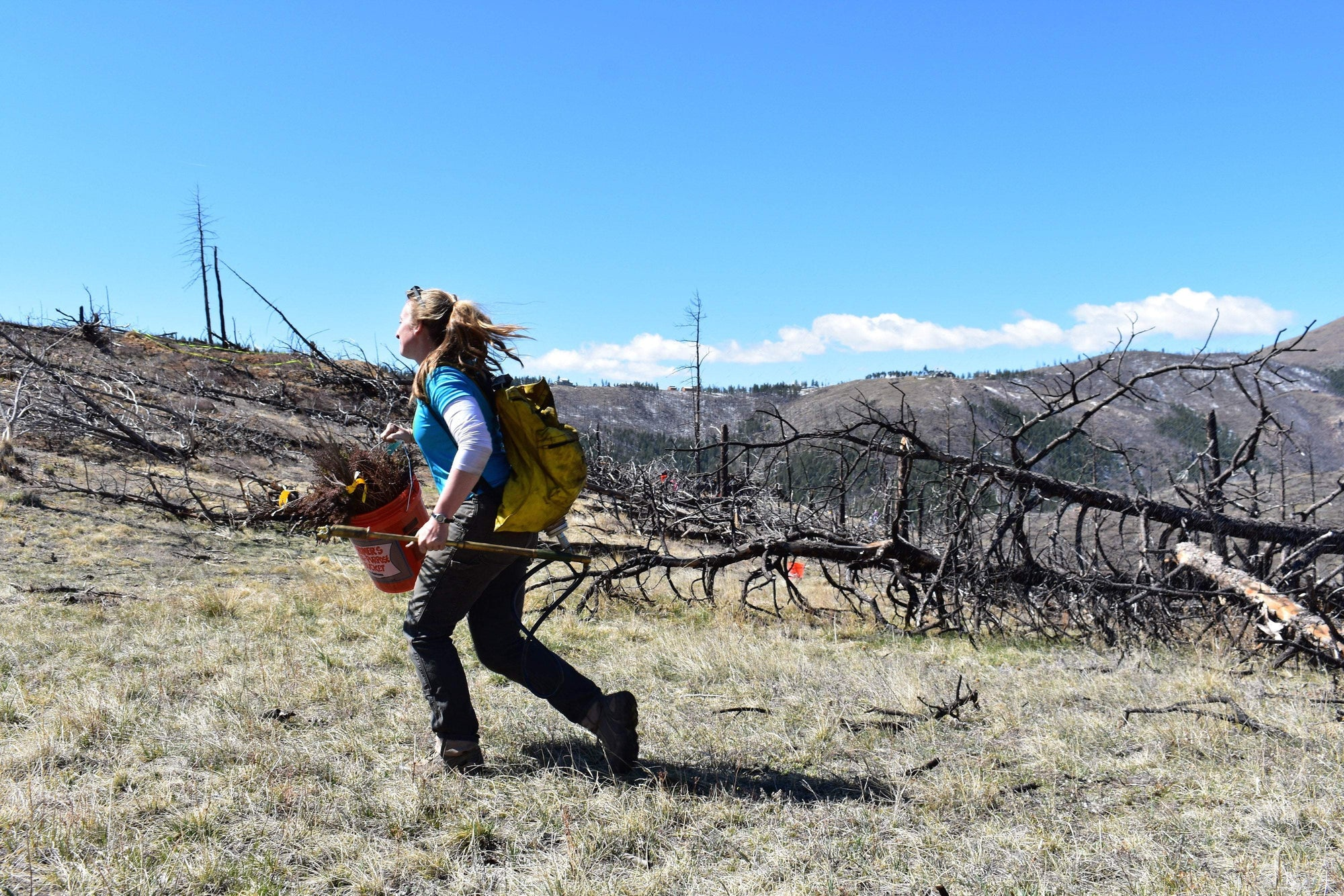 Reforestation Recap: 7,000 Trees Planted in Colorado