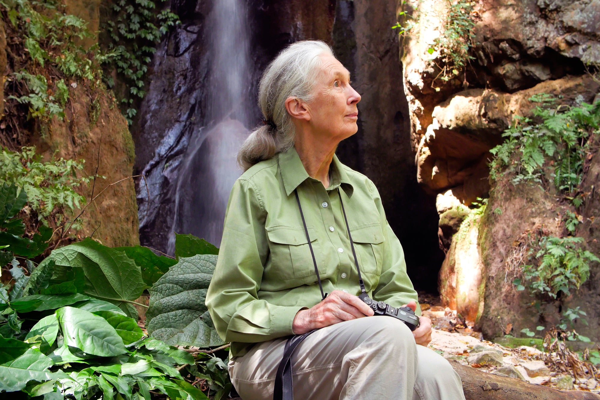 Dr. Jane Goodall outdoors looking to the side