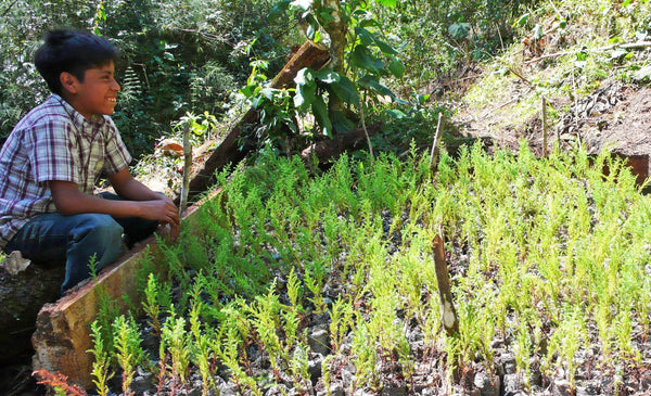 How Reforestation and Social Impact Combine with New Roots