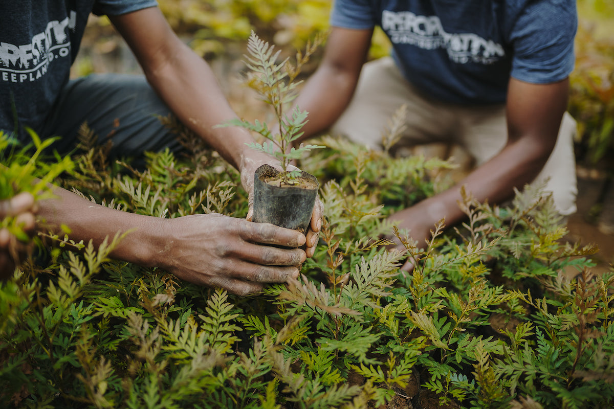 Two people in reforestation t-shirts holding seedlings in Rwanda