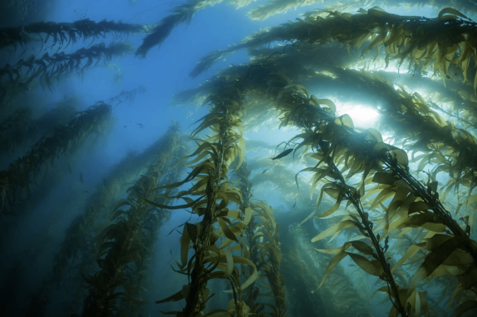 Underwater forest with seaweed from Our Planet