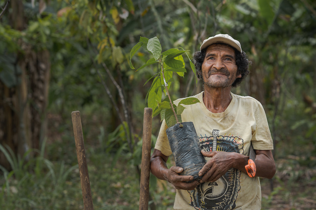 Man holds a tree sapling while standing in the rainforest