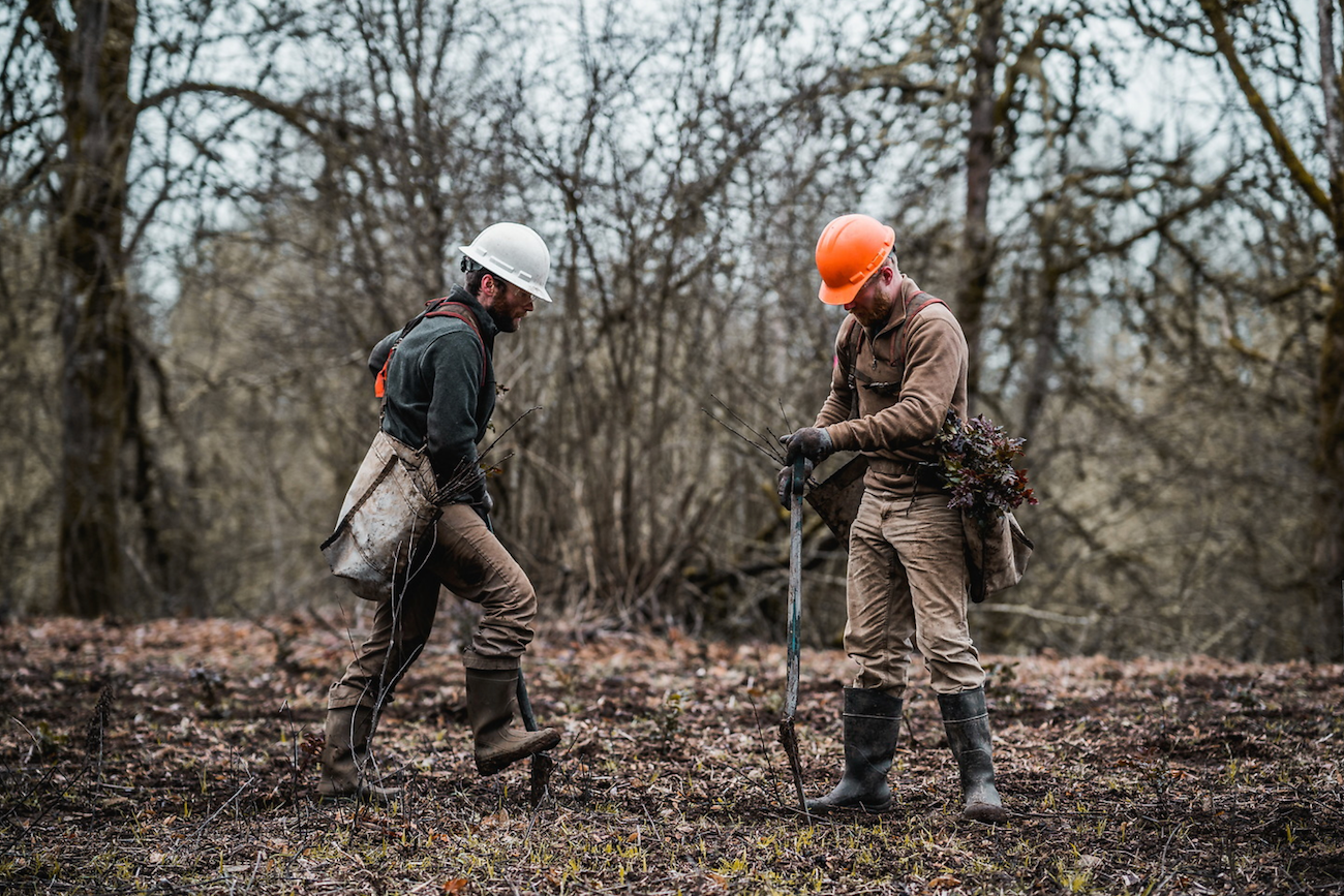 two young men planting trees in the outdoors, sustainable jobs for the economy