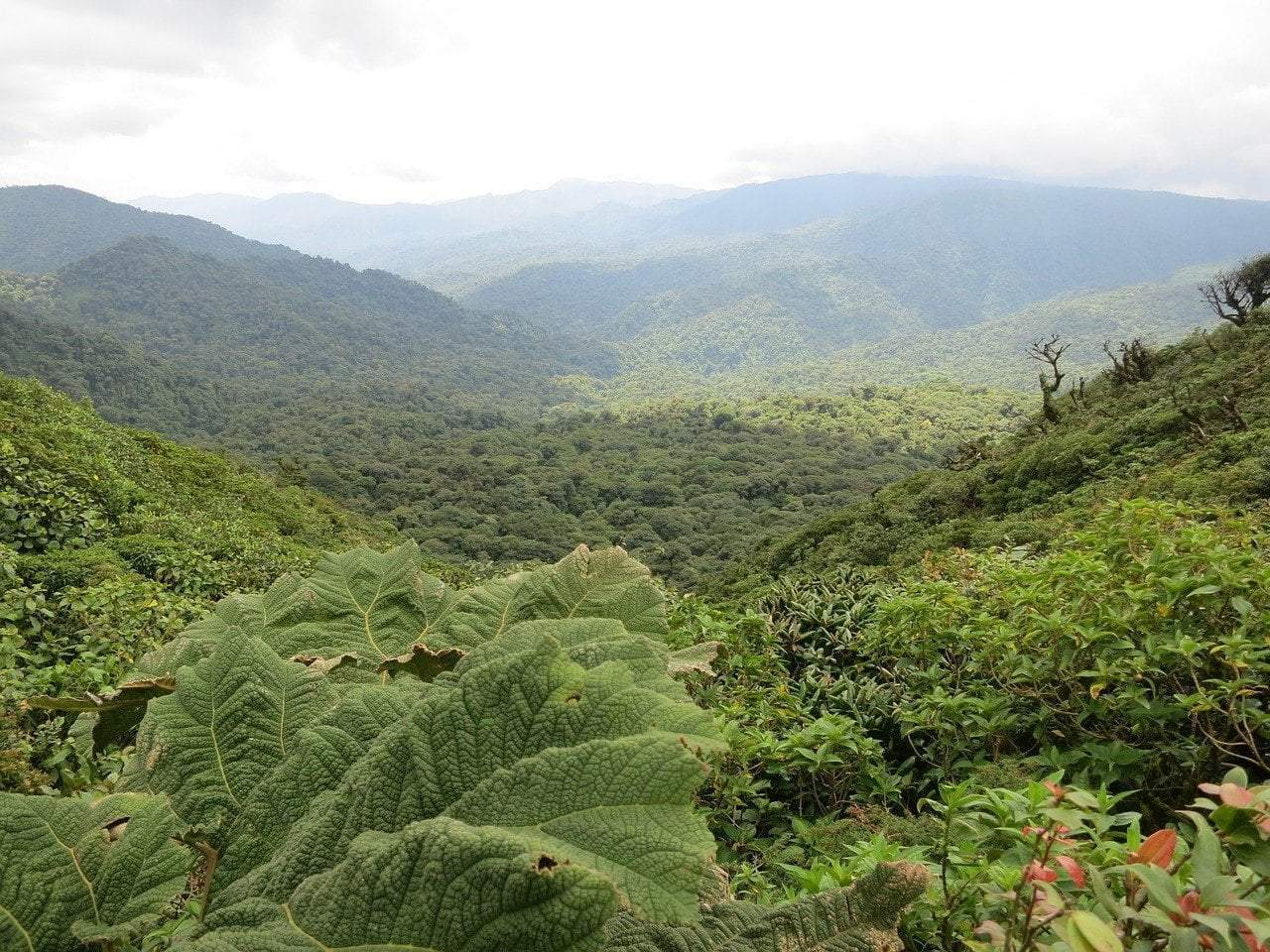 Reforestation Recap: Planting Trees In the Rainforest