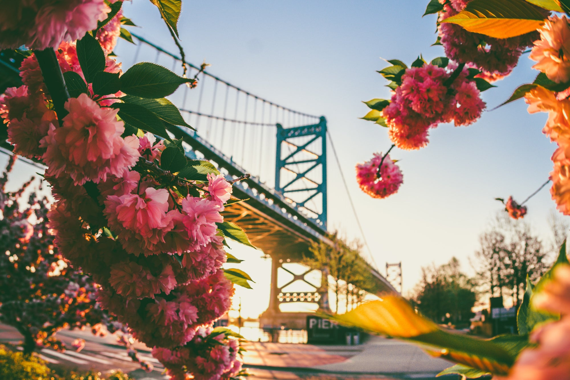 Bridge and flowers in Philadelphia