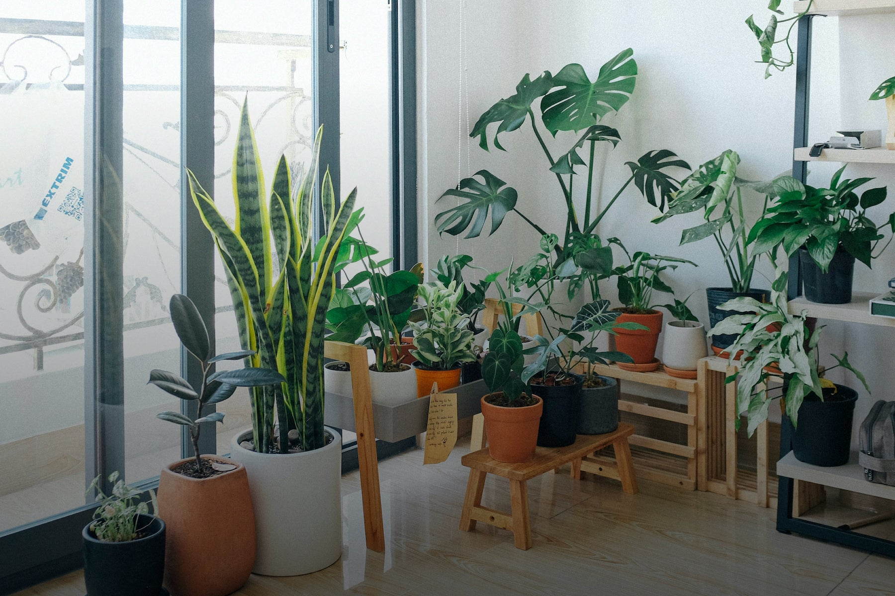 houseplants living room sustainable