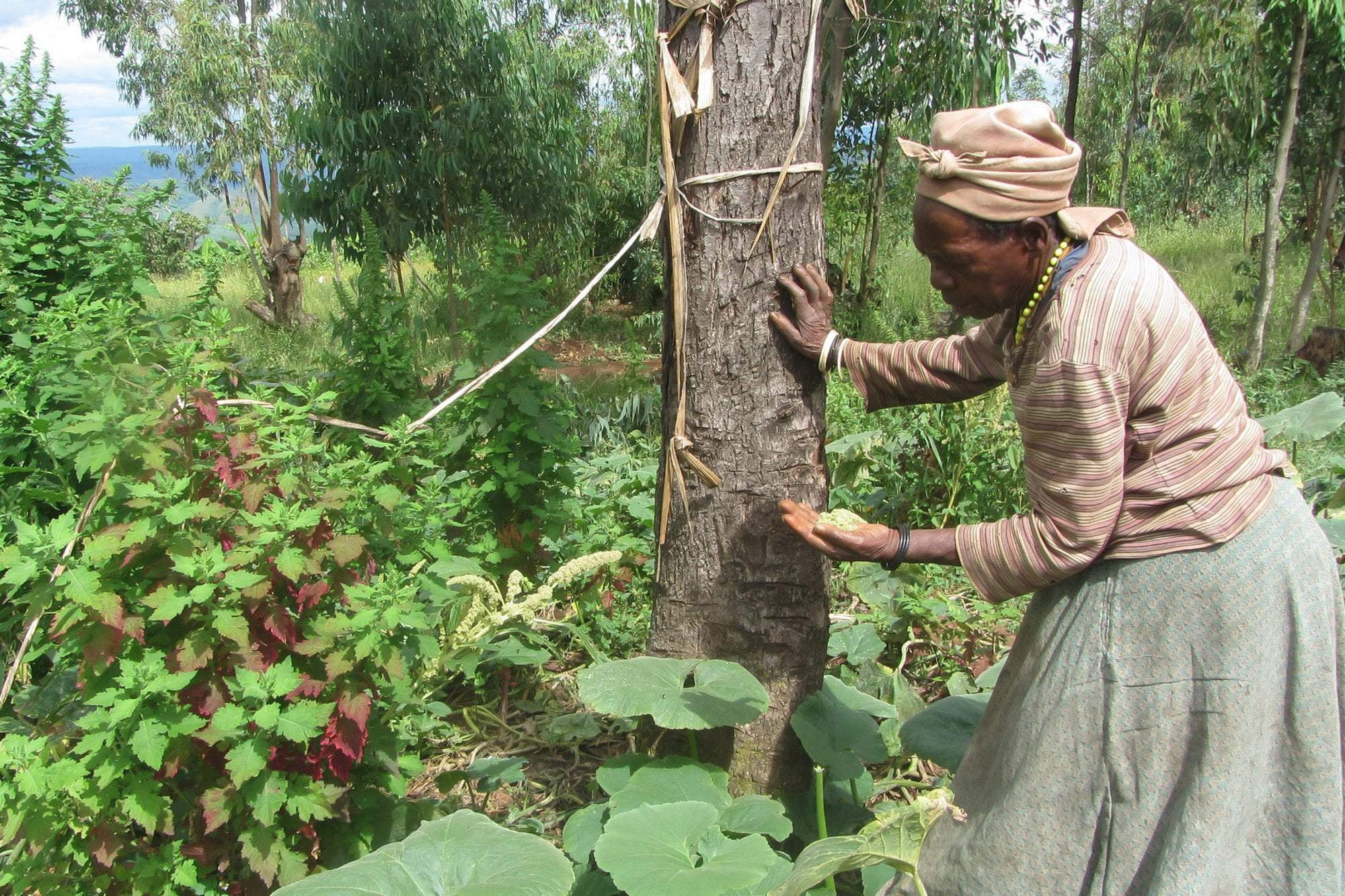 Project Spotlight: Agroforestry in Rwanda