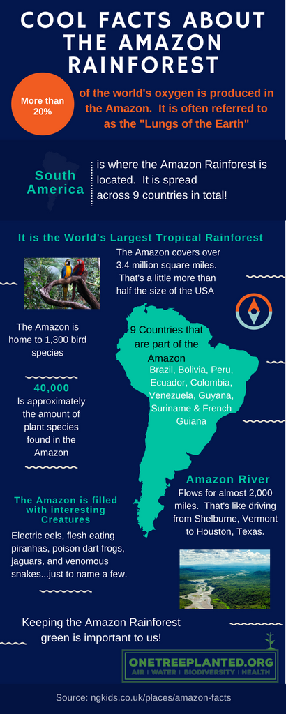 Cool Facts about the Amazon Rainforest