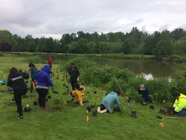 Planting trees in Oregon