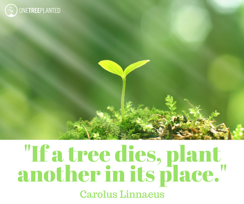 If a trees dies, plant another in its place.