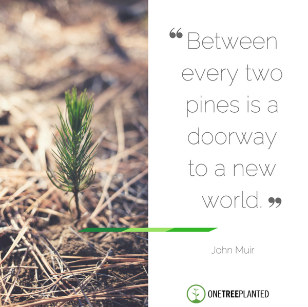 Image of: Metal between Every Two Pines Is Doorway To New World One Tree Planted Inspirational Quotes About Trees One Tree Planted