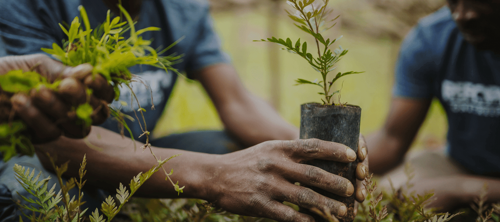 One Tree Planted | Support Global Reforestation: One Dollar