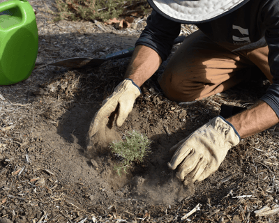 Plant Trees in California - One Tree Planted