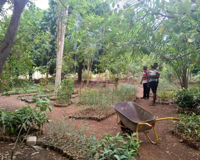 Plant Trees in Ghana - One Tree Planted
