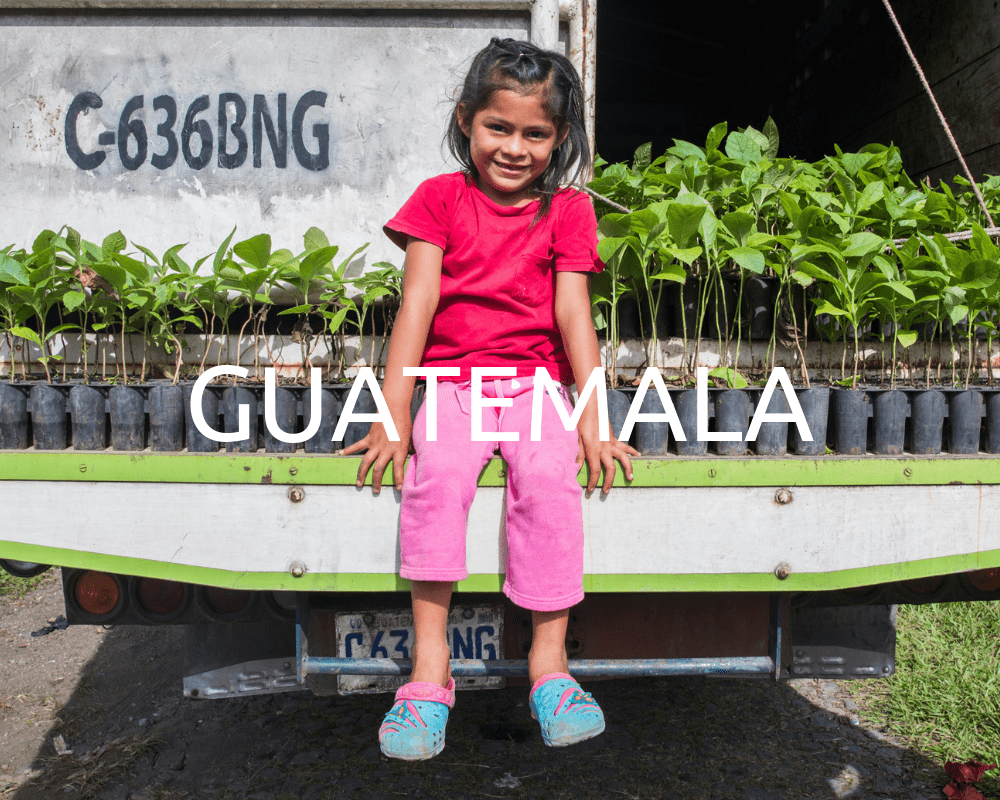 Plant Trees in Guatemala - One Tree Planted