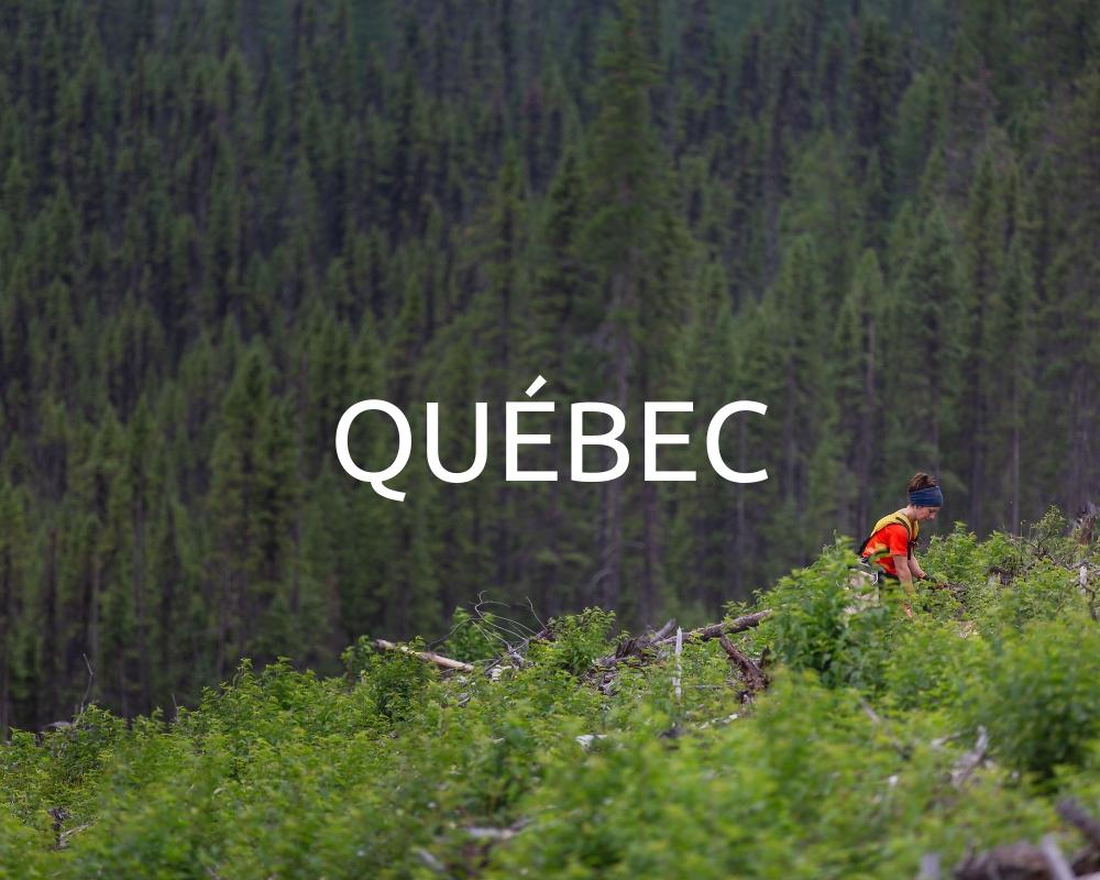 Plant Trees in Quebec - One Tree Planted
