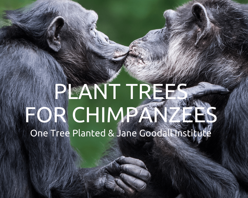 Plant Trees for Chimpanzees | One Tree Planted