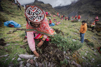 woman planting trees andes