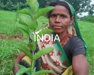 Plant a tree in India