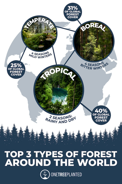 types of forest graphic