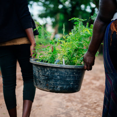 Agroforestry and local communities