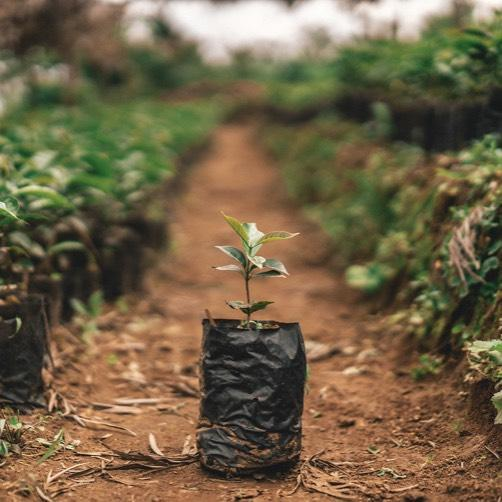 The world needs more trees than ever