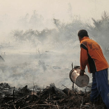 Wildfires in Indonesia