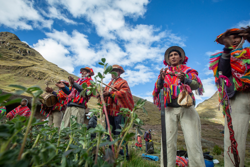 Plant trees for the Andes