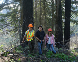 Forest management in BC