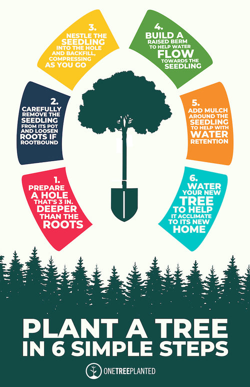 Steps on how to plant a tree poster