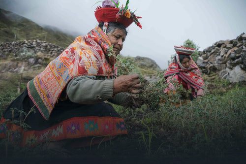 Women planting in trees in the Andes