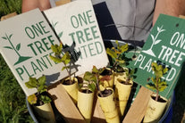 one tree planted signs