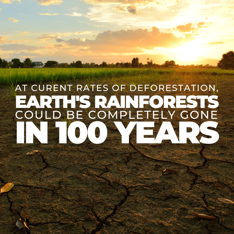 At current rates of deforestation, earth's rainforests could be completely gone in 100 years
