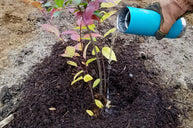 adding mulch for water retention